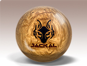 golden_jackal